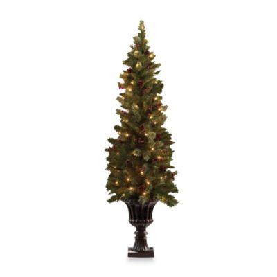 5.5-Foot Baywood Entrance Tree