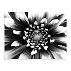 Daylight Black-and-White Floral Wall Art