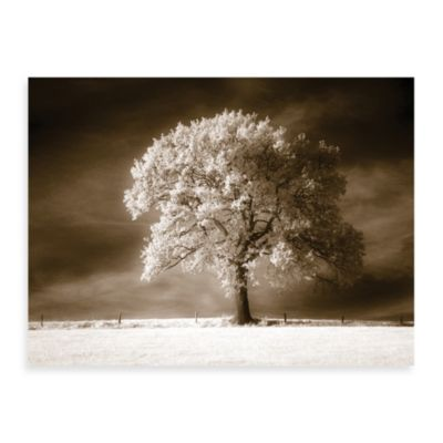 Stability in Sepia Canvas Print by Ilona Wellman