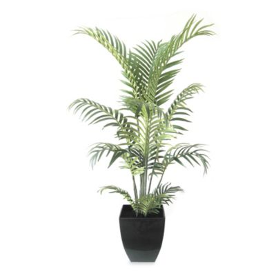 42-Inch Areca Palm Tree in Pot