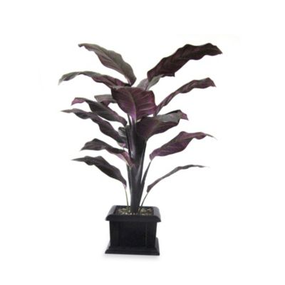 40-Inch Philodendrom Plant in Pot