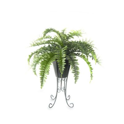 26-Inch Boston Fern in Pot with Metal Stand