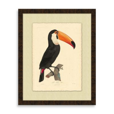 Toucan 1 Framed Art