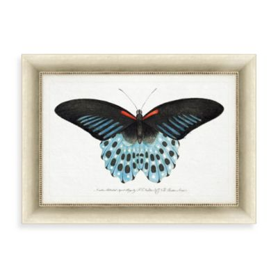 """Blue Butterfly"" Framed Art 1"