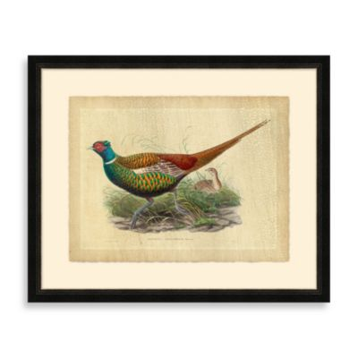 Pheasant 2 Framed Art