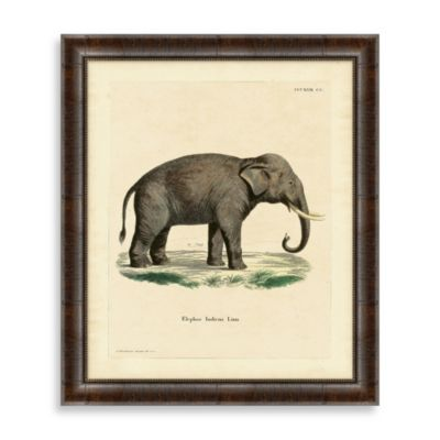 """Elephant"" Framed Art 2"