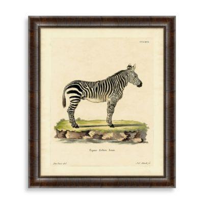 Zebra Framed Art Print 1