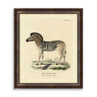 Zebra Framed Art Print 2