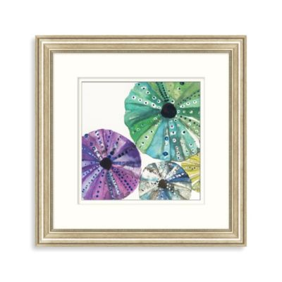 Transparent Sea Urchin 1 Framed Art