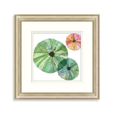 Transparent Sea Urchin 2 Framed Art