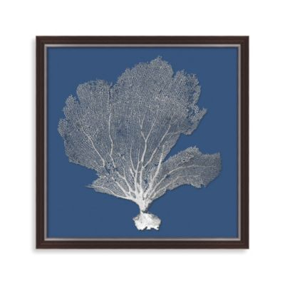Bahama Sea Fan Shadow Box