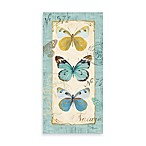 Butterfly Study II Printed Canvas Wall Art