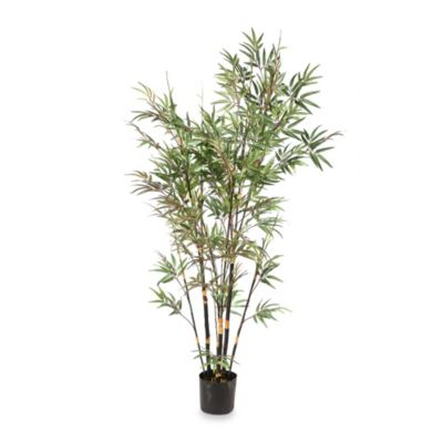 6-Foot Potted Black Decorative Bamboo Plant