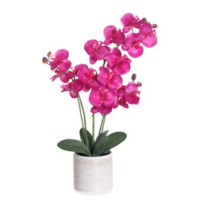 Orchid Decorative Accessories