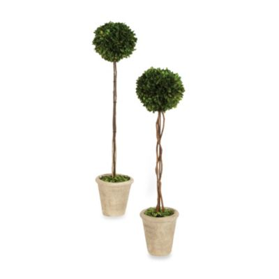 Sage Floral 16-Inch Boxwood Ball Topiary