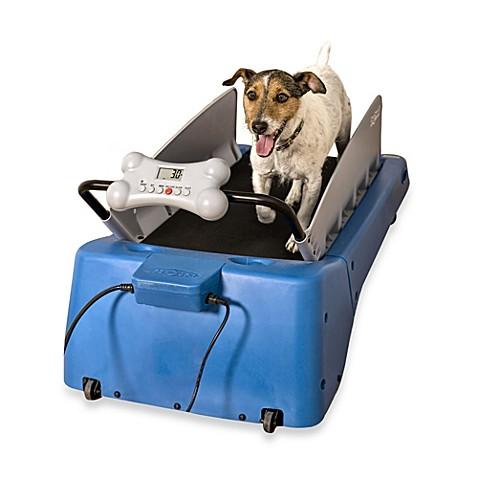 Small Dog Treadmill For Sale