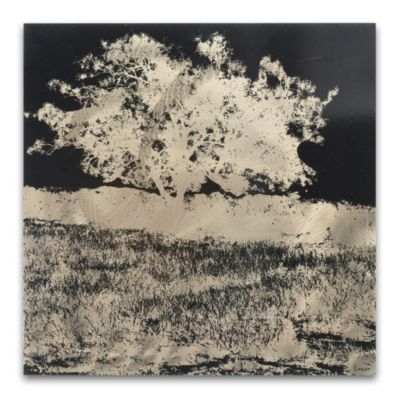 Black and White Negative Tree Wall Art