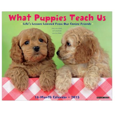 2015 What Puppies Teach Us Wall Calendar