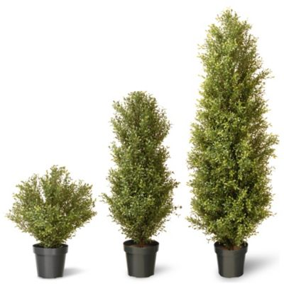 National Tree 72-Inch Argentia Plant with Green Pot