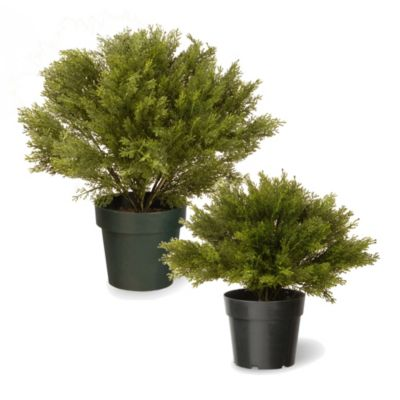 National Tree 15-Inch Globe Juniper with Green Pot