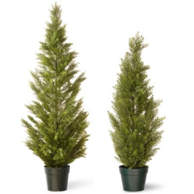 National Tree 72-Inch Arborvitae with Green Pot