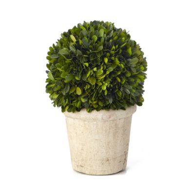Sage Floral Medium Round Boxwood Potted Plant