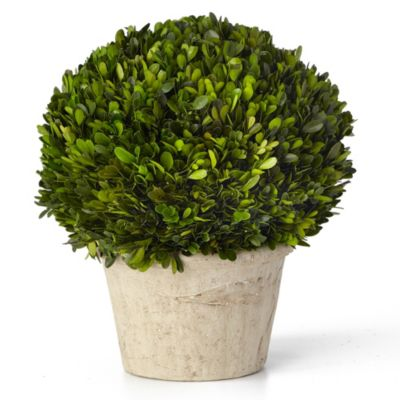 Sage Floral Large Round Boxwood Potted Plant