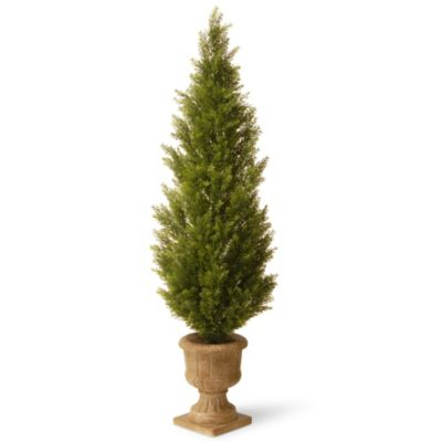National Tree 60-Inch Arborvitae Plant