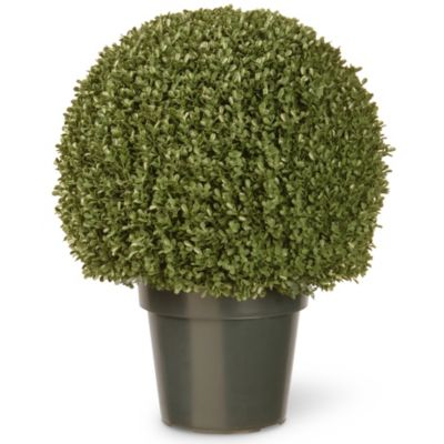 National Tree 22-Inch Mini Boxwood Ball with Green Pot
