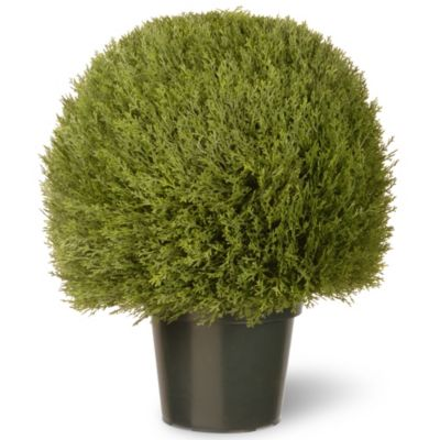 National Tree 24-Inch Cedar Pine Topiary in Green Pot