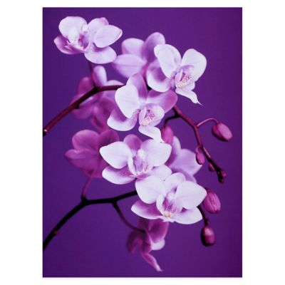 Purple Canvas Art