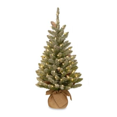 National Tree 3-Foot Snowy Concolor Fir Christmas Tree