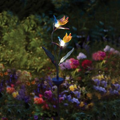 Solar-Powered Birds of Paradise Lighted Garden Stake