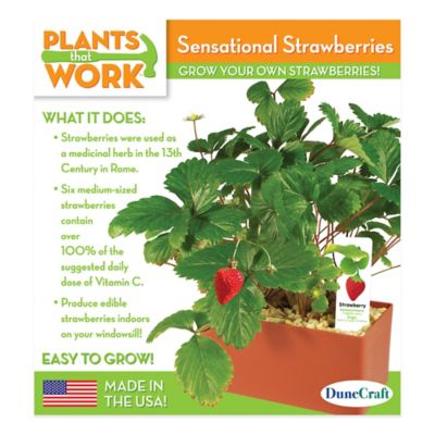 DuneCraft Plants That Work Sensational Strawberries Plant Kit