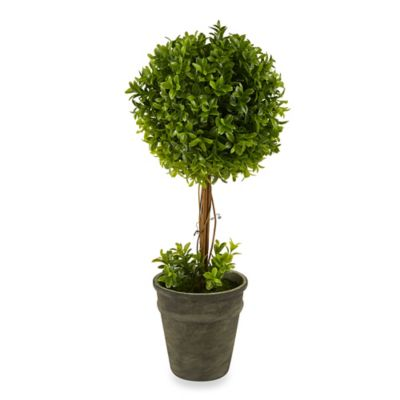 17-Inch Boxwood Topiary