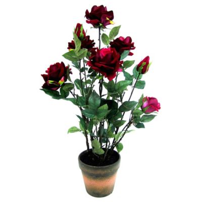 25-Inch Potted Red Rose