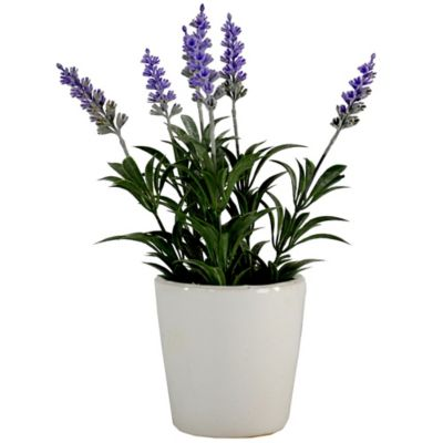 Lavender Decorative Accessories