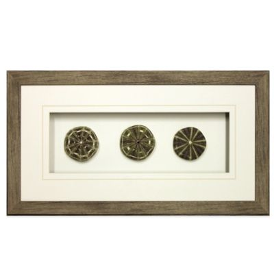Star Creations Sea Urchin Shadow Box 12-Inch x 22-Inch Frame