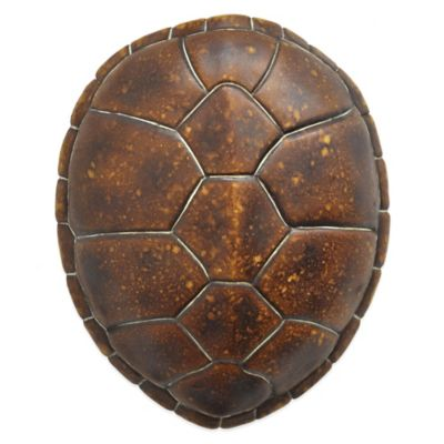 Tortoise Shell Wall Décor
