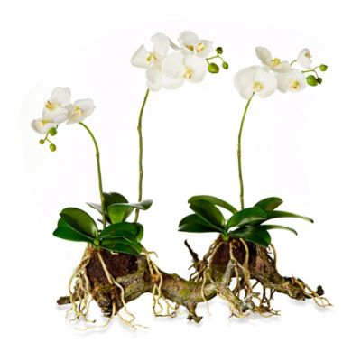 21-Inch Table Orchid Garden