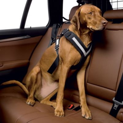 The Original AllSafe™ Crash Tested Large Pet Harness in Black/Silver