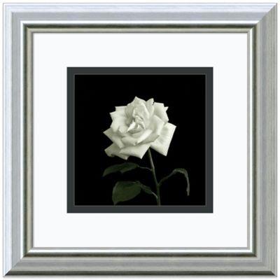 Walter Gritsik Flower Series VIII Framed Print Wall Art