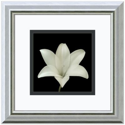 Walter Gritsik Flower Series VII Framed Print Wall Art