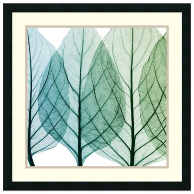 Steven N. Meyers Celosia Leaves I Framed Wall Art