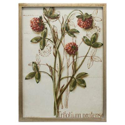 Botanical Trifolium Framed Canvas Wall Art
