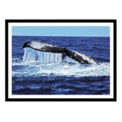 Humpback Whale Tail Slapping Medium Photographed Framed Print Wall Art