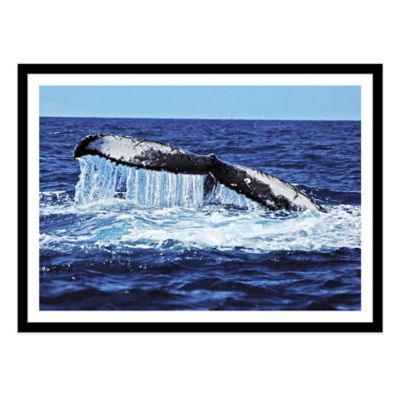Humpback Whale Tail Slapping Large Photographed Framed Print Wall Art