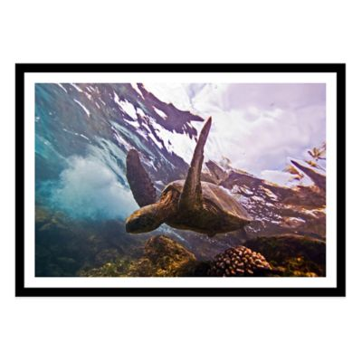 Turtle Medium Photographed Framed Print Wall Art