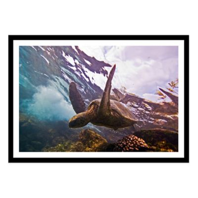 Turtle Large Photographed Framed Print Wall Art