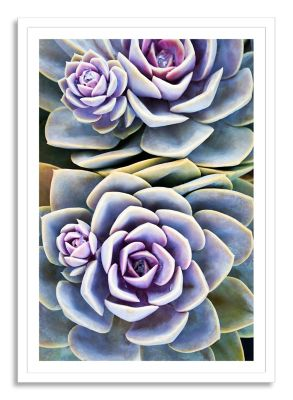 So Succulent Large Framed Print Wall Art